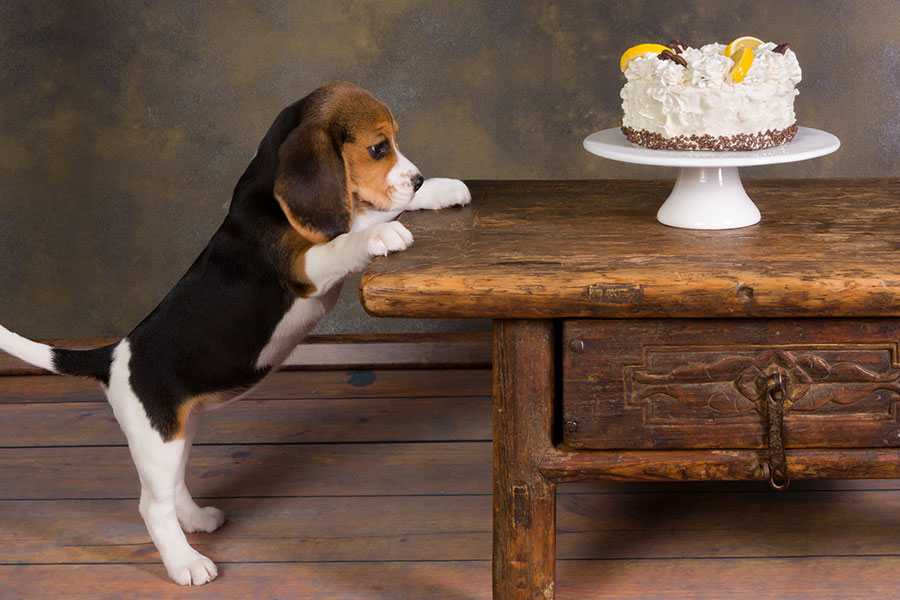 5 Thanksgiving Foods Never to Share with Your Dog