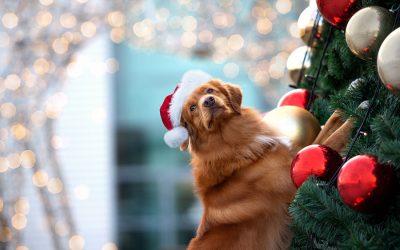 5 Ways to Keep Your Pet Safe During Christmas